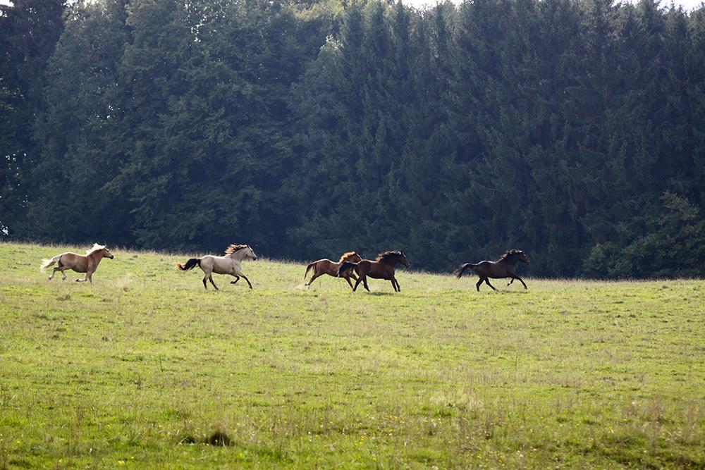 Ranch Lentigny Chevaux