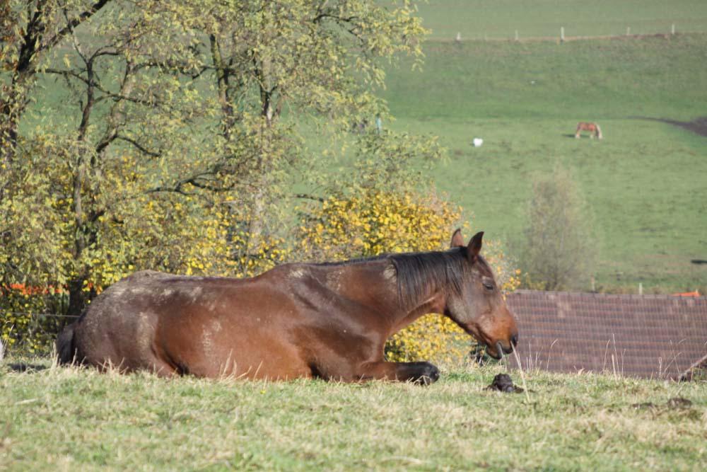 Chevaux Ranch Lentigny
